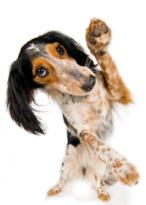 honden gedragstherapeut