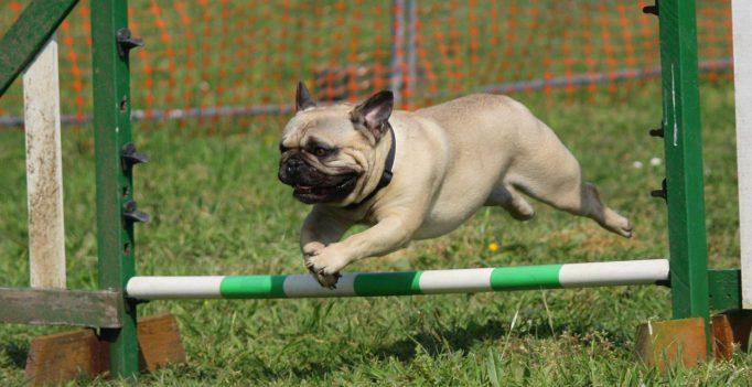 Hondencursus nabij Den Haag