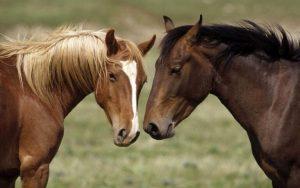 Leuke namen voor paarden